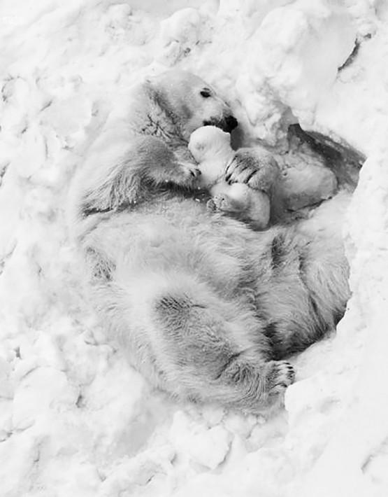 09 mamma orsa