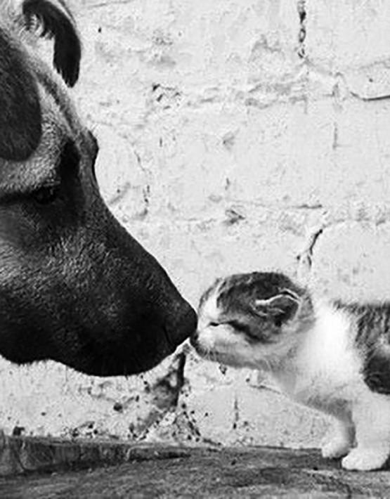 Naso naso cane gatto