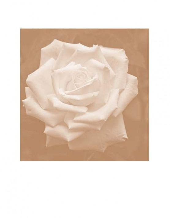 00 Rosa