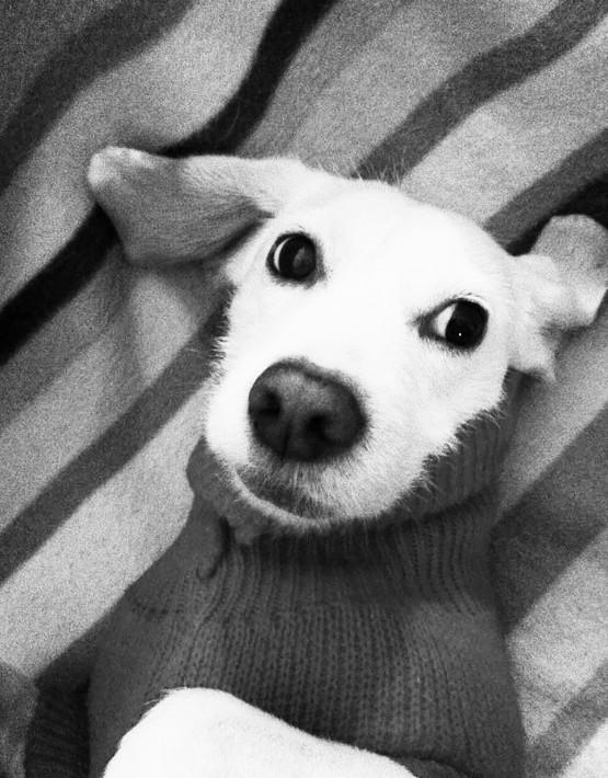 20 Baldo con maglione